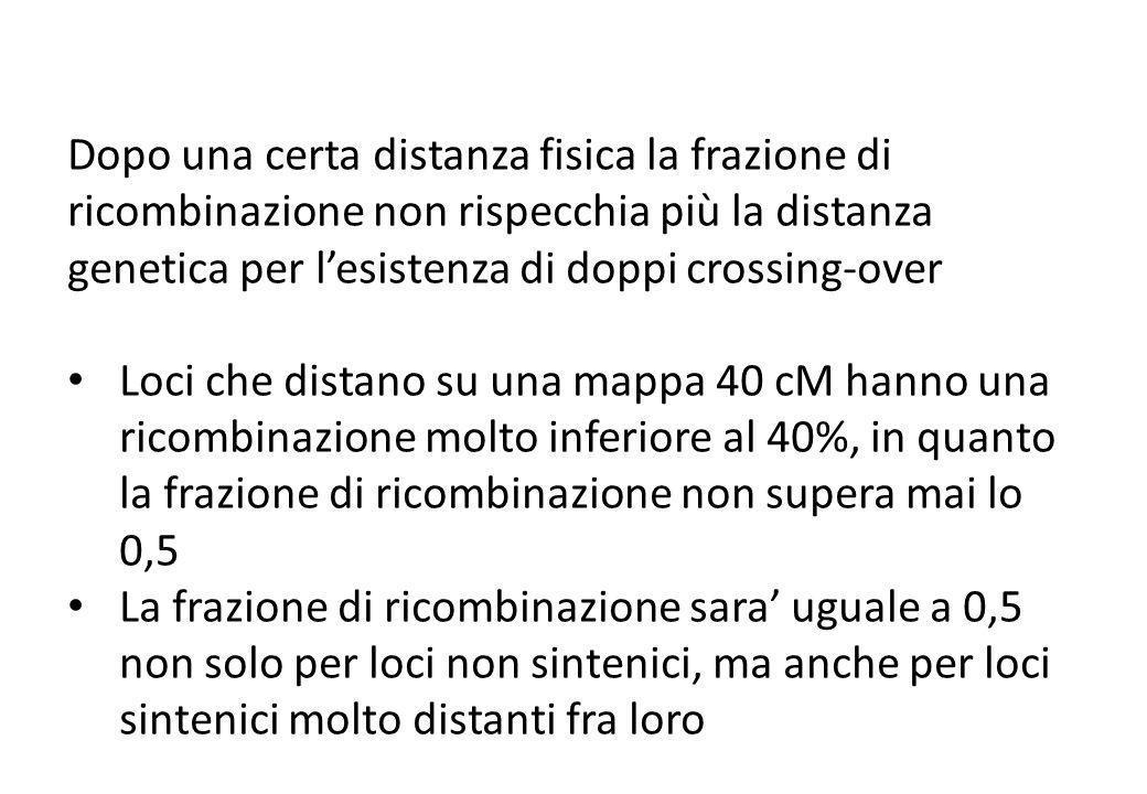 Dopo una certa distanza fisica la frazione di ricombinazione non rispecchia più la distanza genetica per lesistenza di doppi crossing-over Loci che di