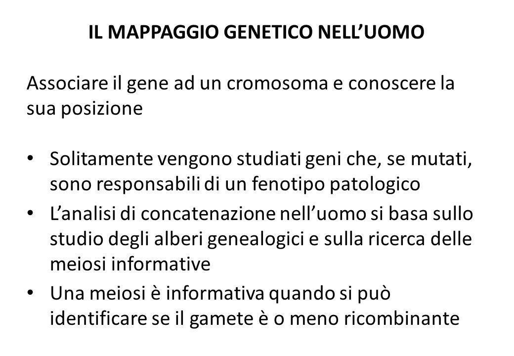 IL MAPPAGGIO GENETICO NELLUOMO Associare il gene ad un cromosoma e conoscere la sua posizione Solitamente vengono studiati geni che, se mutati, sono r