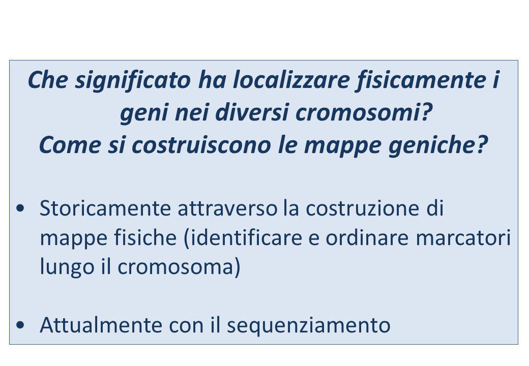Che significato ha localizzare fisicamente i geni nei diversi cromosomi? Come si costruiscono le mappe geniche? Storicamente attraverso la costruzione