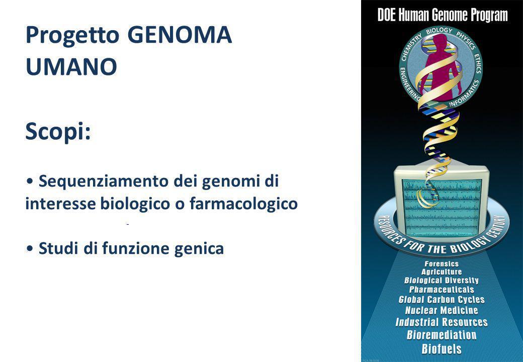 Progetto GENOMA UMANO Scopi: Sequenziamento dei genomi di interesse biologico o farmacologico Studi di funzione genica http://www.ornl.gov/sci/techres