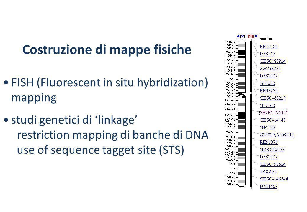 FISH (Fluorescent in situ hybridization) mapping
