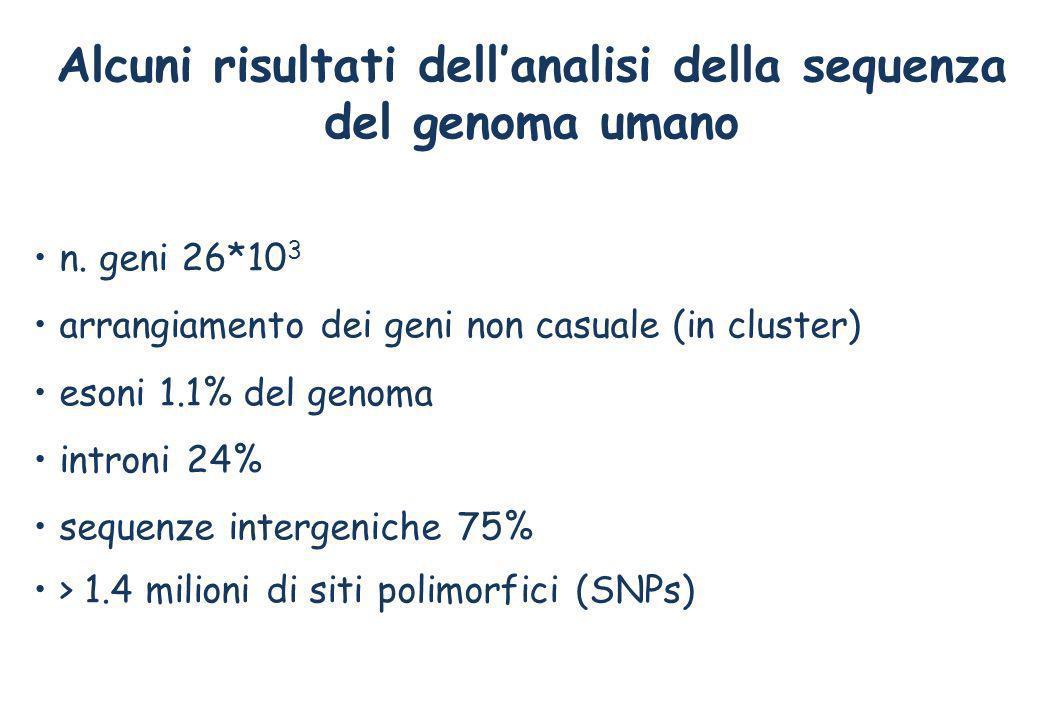 Alcuni risultati dellanalisi della sequenza del genoma umano n. geni 26*10 3 arrangiamento dei geni non casuale (in cluster) esoni 1.1% del genoma int