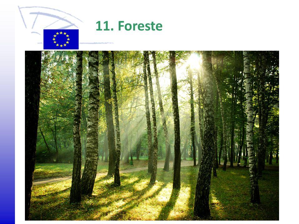 © 2009 Europäisches Parlament, Besucherdienst Agrarumweltprogramm 11. Foreste