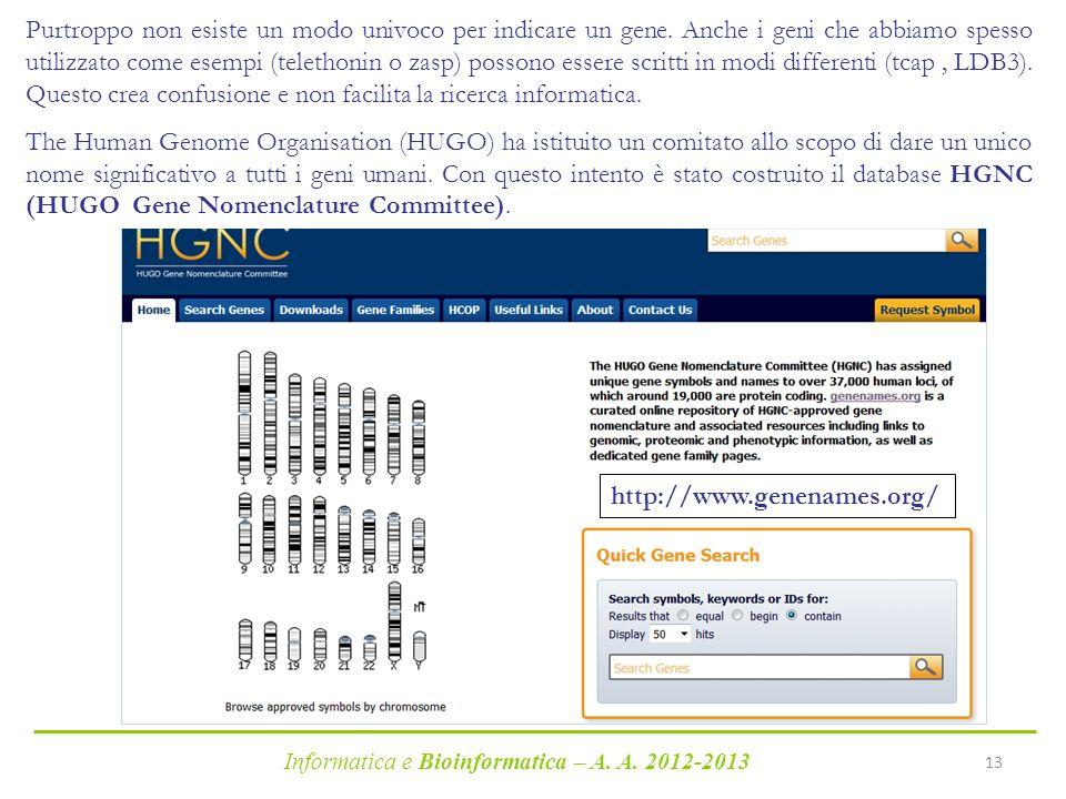 Informatica e Bioinformatica – A. A. 2012-2013 13 Purtroppo non esiste un modo univoco per indicare un gene. Anche i geni che abbiamo spesso utilizzat