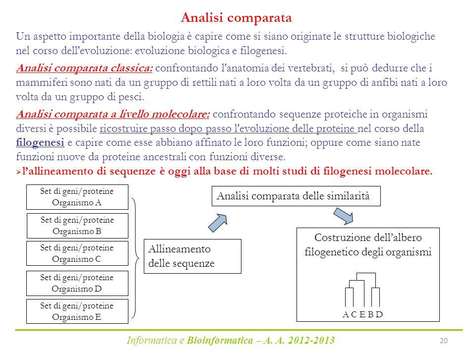 Informatica e Bioinformatica – A. A. 2012-2013 20 Allineamento delle sequenze Analisi comparata delle similarità Un aspetto importante della biologia