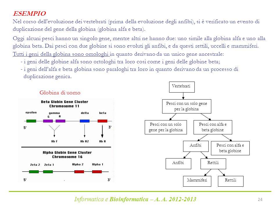 Informatica e Bioinformatica – A. A. 2012-2013 24 Vertebrati Pesci con alfa e beta globine Pesci con un solo gene per la globina Pesci con alfa e beta