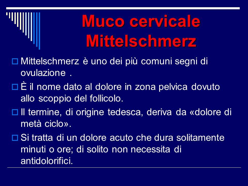 Muco cervicale Mittelschmerz Mittelschmerz è uno dei più comuni segni di ovulazione. È il nome dato al dolore in zona pelvica dovuto allo scoppio del