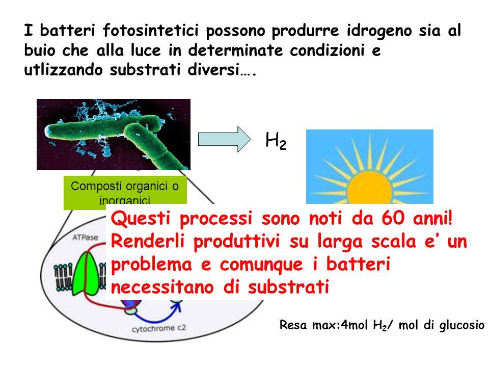 I batteri fotosintetici possono produrre idrogeno sia al buio che alla luce in determinate condizioni e utlizzando substrati diversi…. H2H2 Composti o