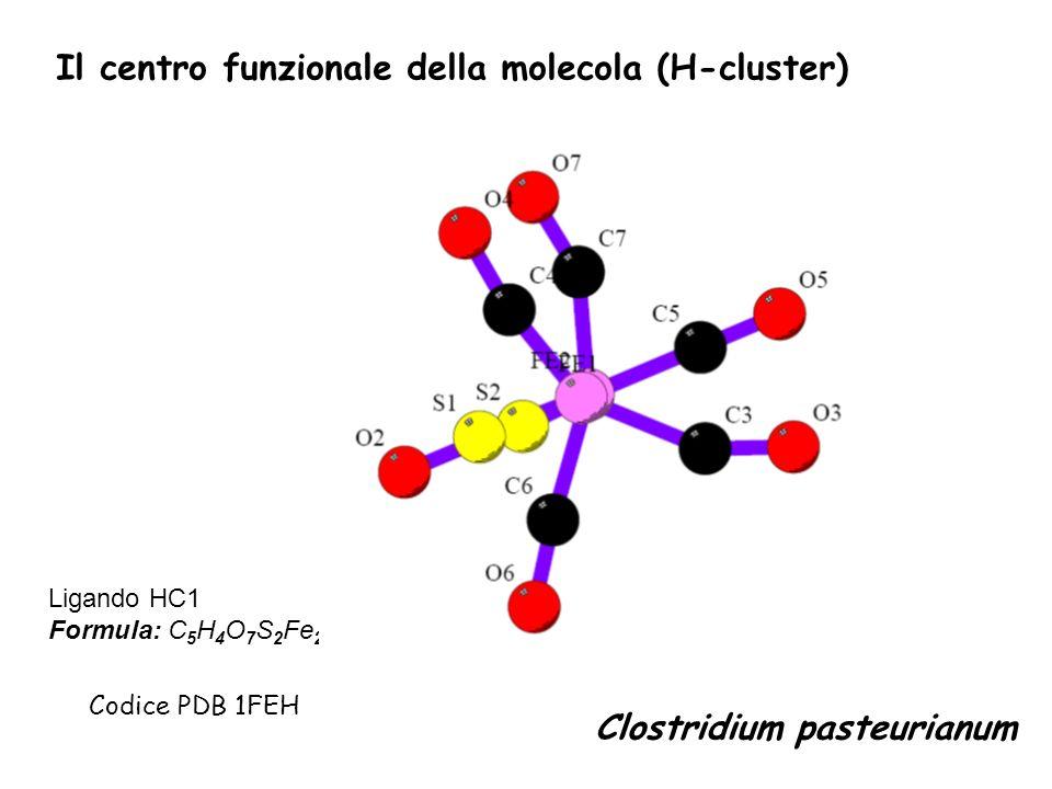 Ligando HC1 Formula: C 5 H 4 O 7 S 2 Fe 2 Codice PDB 1FEH Clostridium pasteurianum Il centro funzionale della molecola (H-cluster)