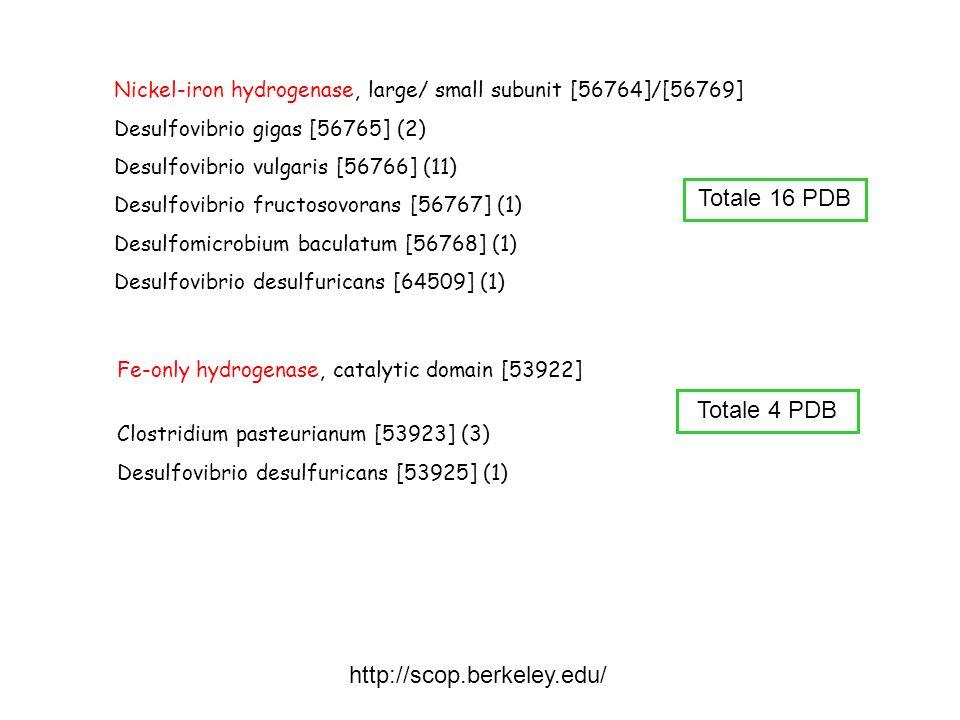 Nickel-iron hydrogenase, large/ small subunit [56764]/[56769] Desulfovibrio gigas [56765] (2) Desulfovibrio vulgaris [56766] (11) Desulfovibrio fructo