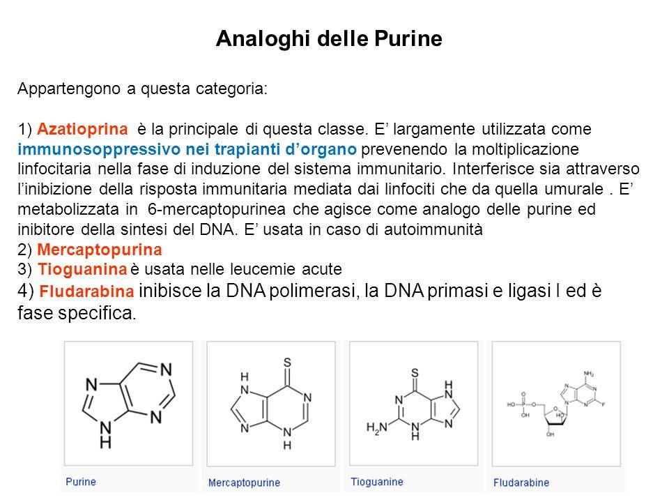 Analoghi delle Purine Appartengono a questa categoria: 1) Azatioprina è la principale di questa classe. E largamente utilizzata come immunosoppressivo