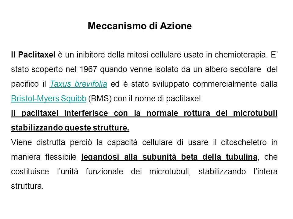 Il Paclitaxel è un inibitore della mitosi cellulare usato in chemioterapia. E stato scoperto nel 1967 quando venne isolato da un albero secolare del p