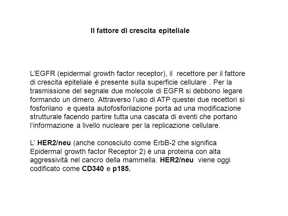LEGFR (epidermal growth factor receptor), il recettore per il fattore di crescita epiteliale è presente sulla superficie cellulare. Per la trasmission