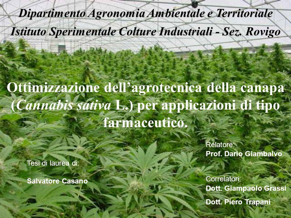 Ottimizzazione dellagrotecnica della canapa (Cannabis sativa L.) per applicazioni di tipo farmaceutico. Salvatore Casano Tesi di laurea di: Relatore: