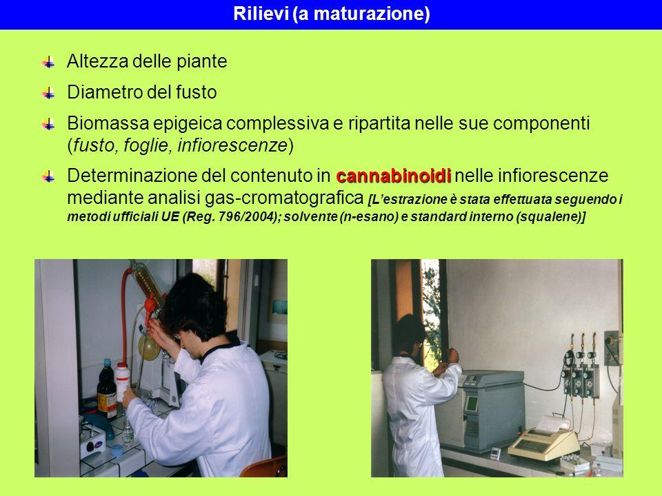 Rilievi (a maturazione) Altezza delle piante Diametro del fusto Biomassa epigeica complessiva e ripartita nelle sue componenti (fusto, foglie, infiore