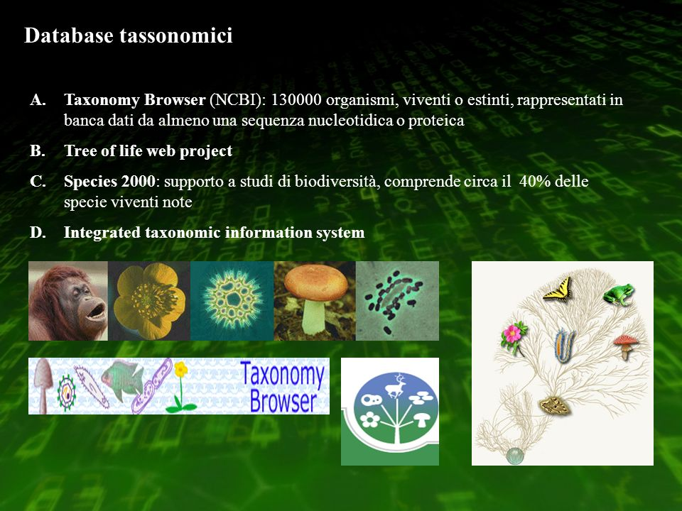 Database tassonomici A.Taxonomy Browser (NCBI): 130000 organismi, viventi o estinti, rappresentati in banca dati da almeno una sequenza nucleotidica o proteica B.Tree of life web project C.Species 2000: supporto a studi di biodiversità, comprende circa il 40% delle specie viventi note D.Integrated taxonomic information system
