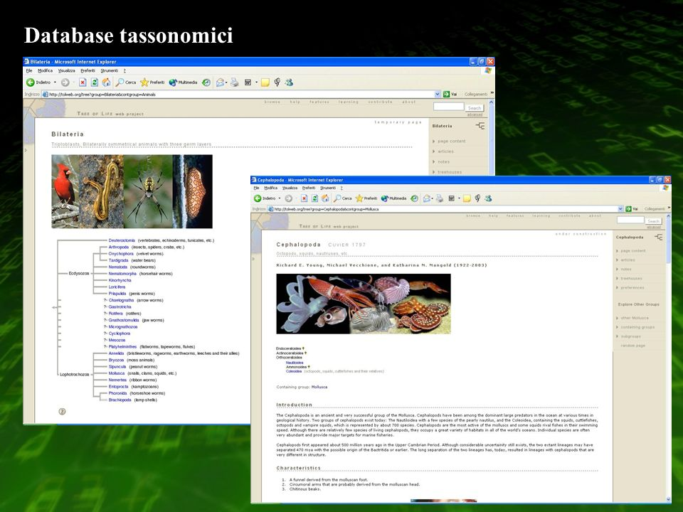 Database tassonomici