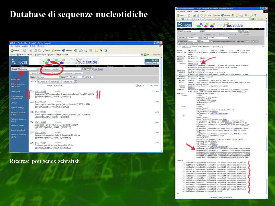 Database di sequenze nucleotidiche Ricerca: pou genes zebrafish
