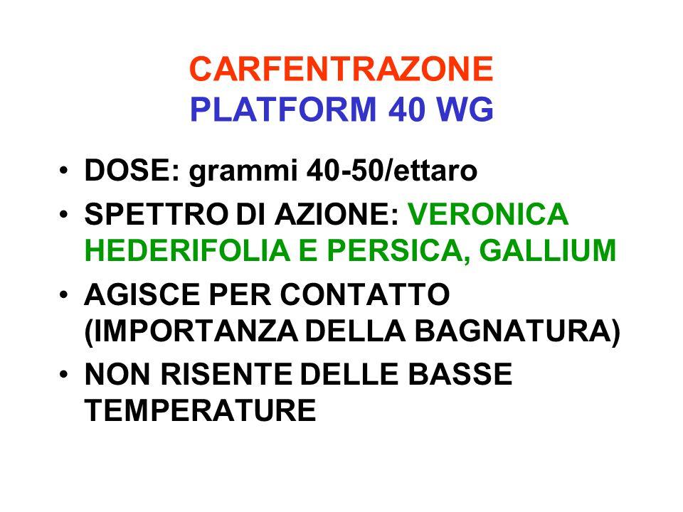 CARFENTRAZONE PLATFORM 40 WG DOSE: grammi 40-50/ettaro SPETTRO DI AZIONE: VERONICA HEDERIFOLIA E PERSICA, GALLIUM AGISCE PER CONTATTO (IMPORTANZA DELL