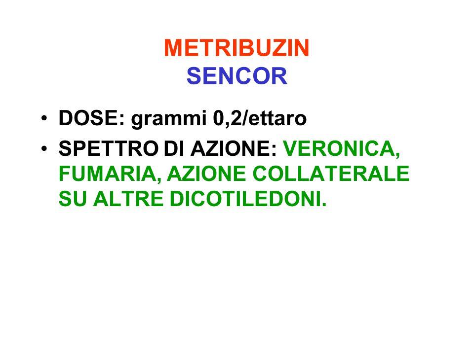 METRIBUZIN SENCOR DOSE: grammi 0,2/ettaro SPETTRO DI AZIONE: VERONICA, FUMARIA, AZIONE COLLATERALE SU ALTRE DICOTILEDONI.