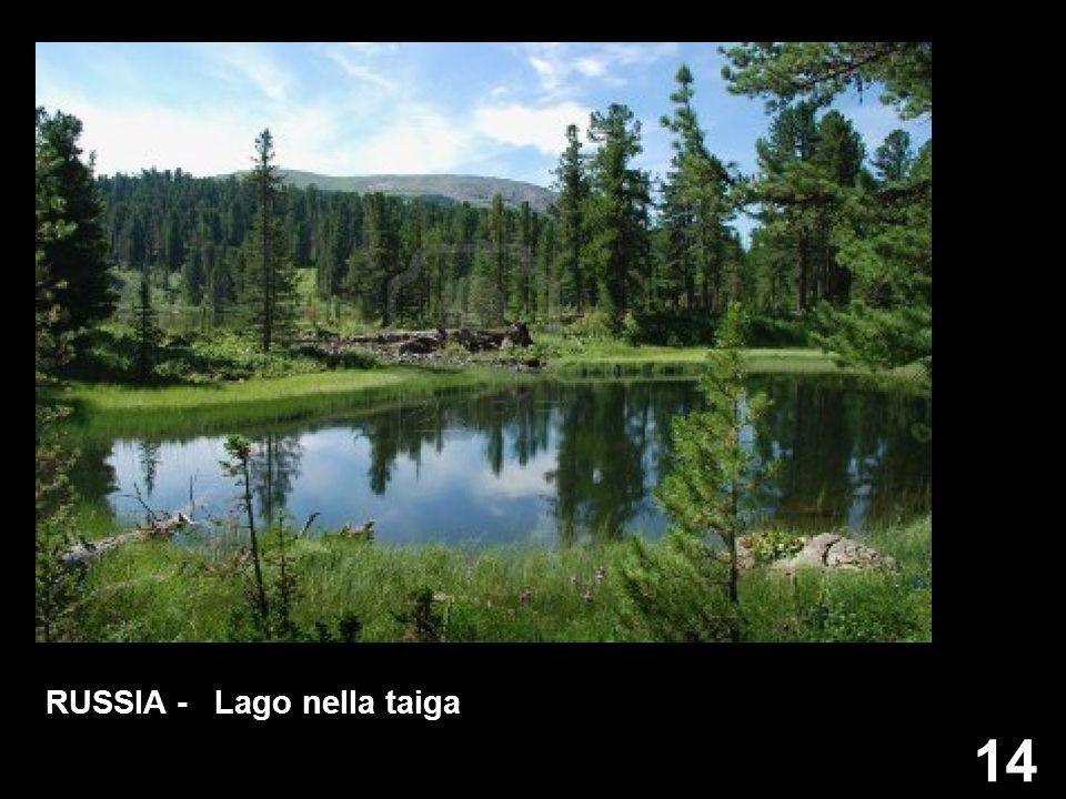 14 RUSSIA - Lago nella taiga