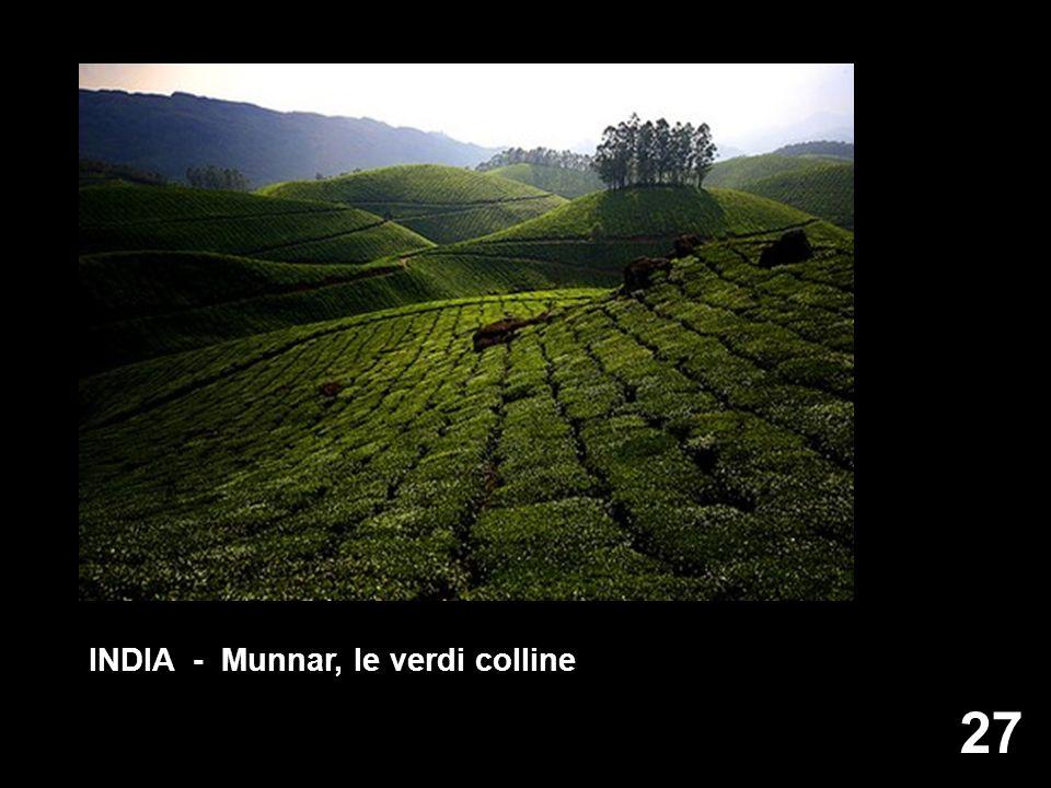 27 INDIA - Munnar, le verdi colline