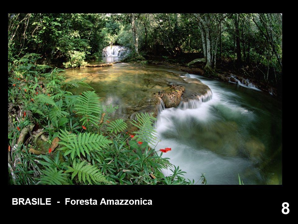 8 8 BRASILE - Foresta Amazzonica