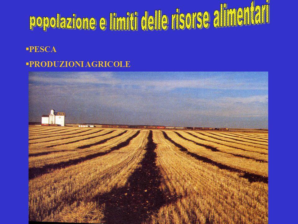 PESCA PRODUZIONI AGRICOLE