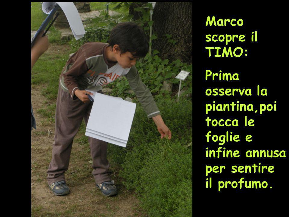 Marco scopre il TIMO: Prima osserva la piantina,poi tocca le foglie e infine annusa per sentire il profumo.