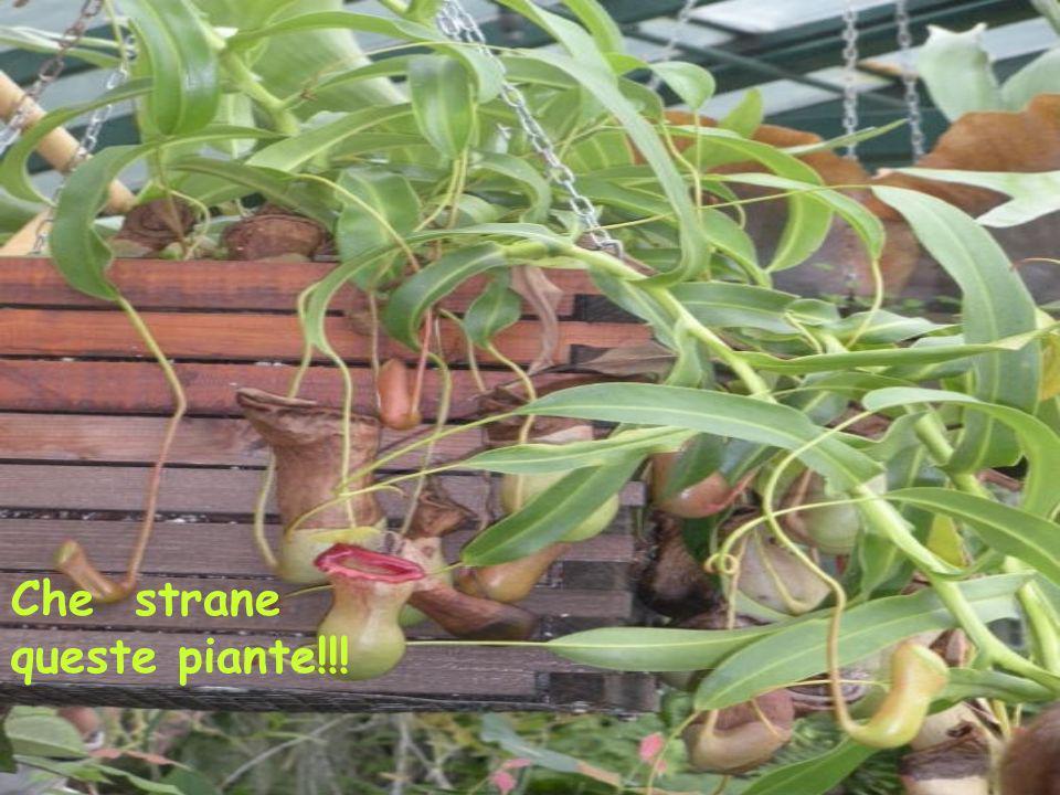 Che strane queste piante!!!