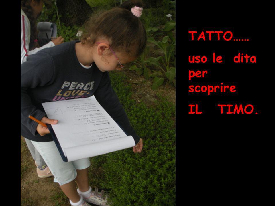 tatto TATTO…… uso le dita per scoprire IL TIMO.