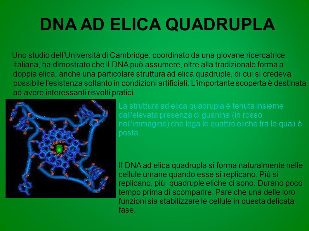 DNA AD ELICA QUADRUPLA Uno studio dell'Università di Cambridge, coordinato da una giovane ricercatrice italiana, ha dimostrato che il DNA può assumere