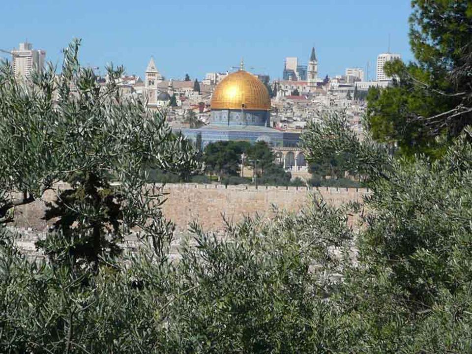 Benedetto XVI ha dedicato lUdienza Generale di mercoledì 1 febbraio 2012 nellaula Paolo VI alla preghiera di Gesù nellorto del Getsemani