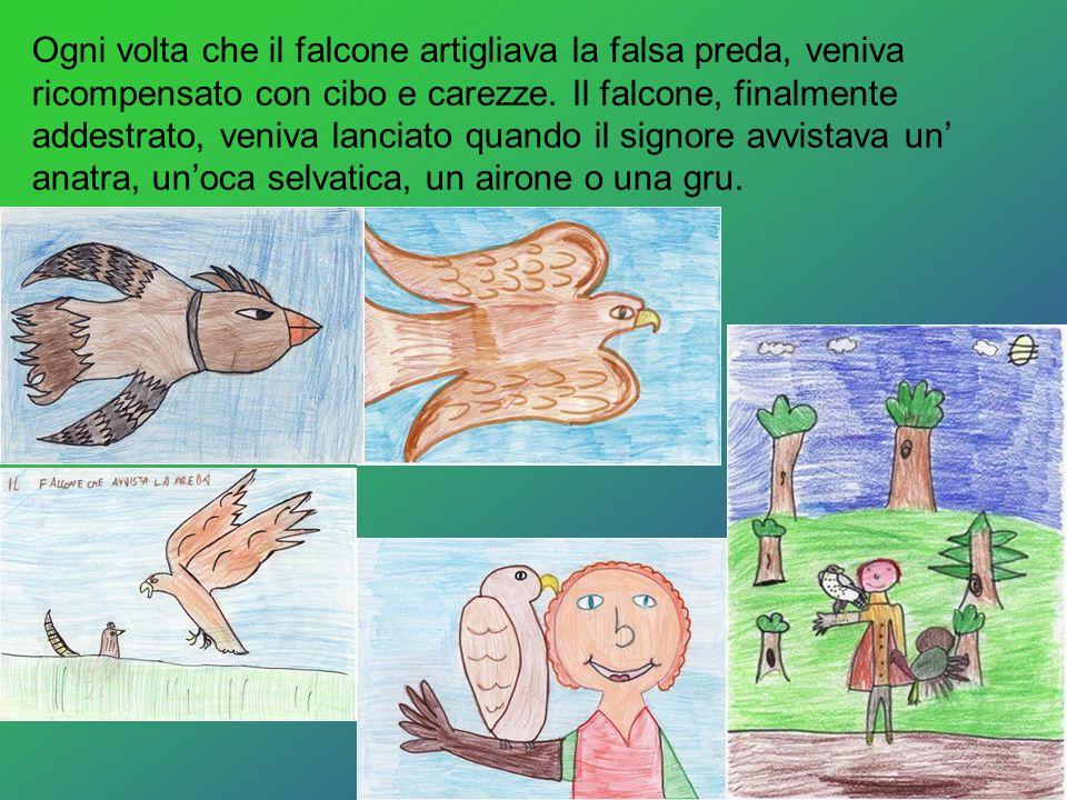 Ogni volta che il falcone artigliava la falsa preda, veniva ricompensato con cibo e carezze.