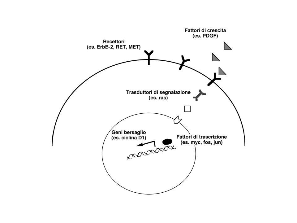 To the MAPK pathway Myc Cyclin D2 and D3 Bcl-X L Stat3 e coinvolto per lo piu indirettamente (costantemente attivata) nella tumorigenesi