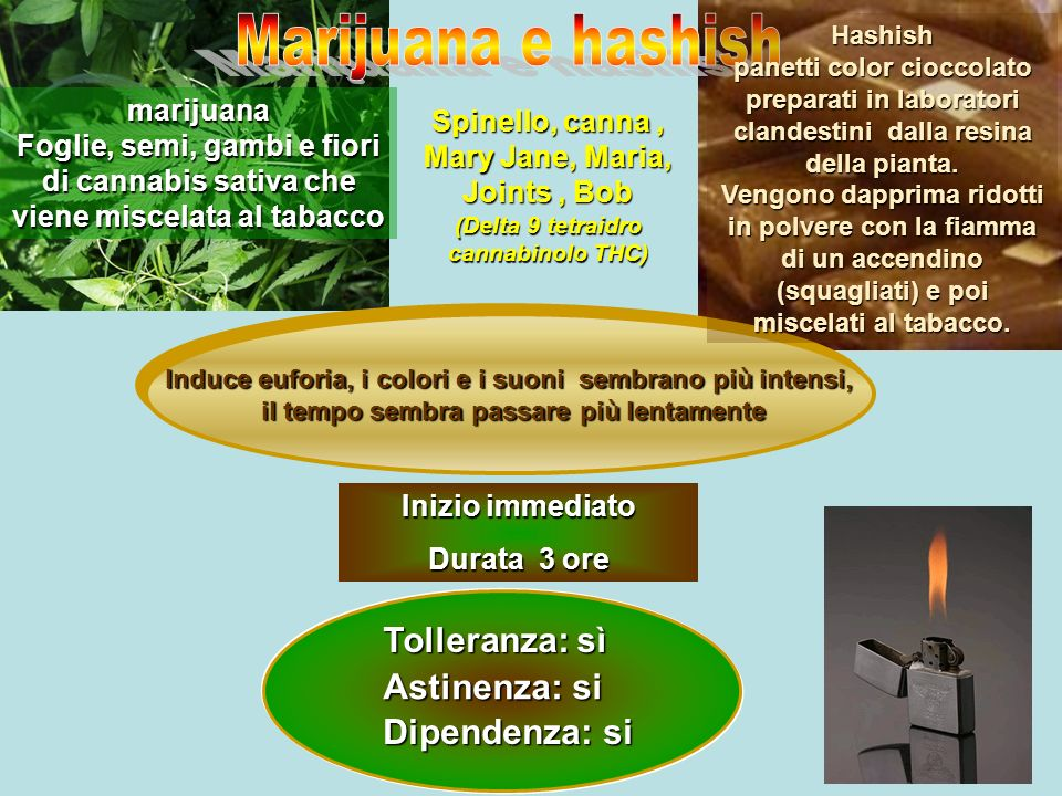 Spinello, canna, Mary Jane, Maria, Joints, Bob Tolleranza: sì Astinenza: si Dipendenza: si (Delta 9 tetraidro cannabinolo THC) marijuana Foglie, semi,