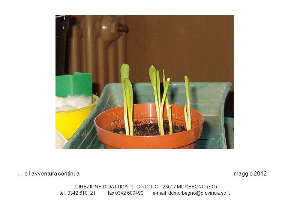 … e lavventura continua maggio 2012 DIREZIONE DIDATTICA 1° CIRCOLO 23017 MORBEGNO (SO) tel. 0342 610121 fax 0342 600490 e-mail ddmorbegno@provincia.so