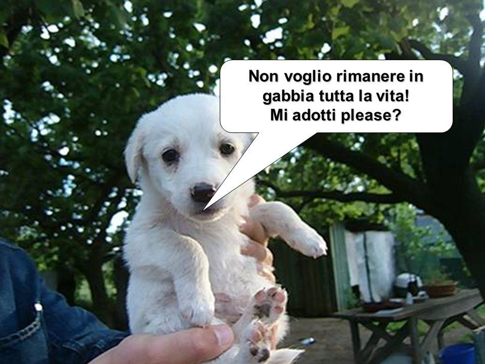 VISITA IL SITO www.ridiamopps.it Tel. 0575593567 corrado.santini@coldiretti.it