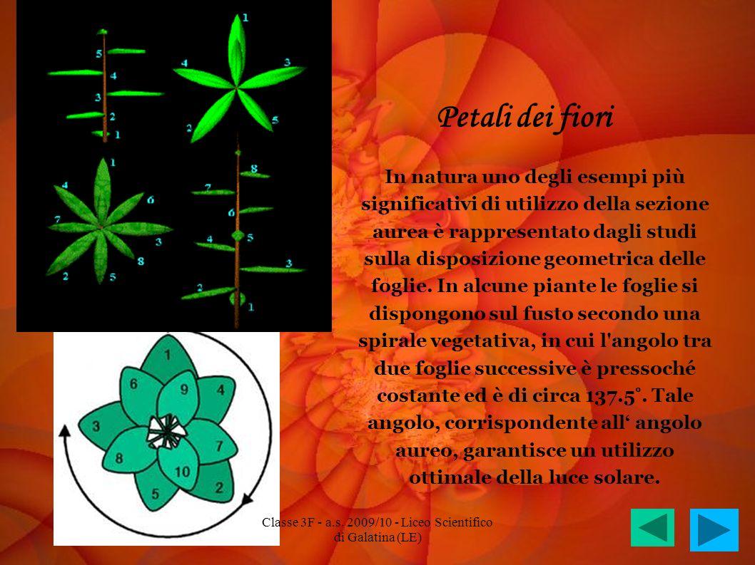 Petali dei fiori In natura uno degli esempi più significativi di utilizzo della sezione aurea è rappresentato dagli studi sulla disposizione geometric