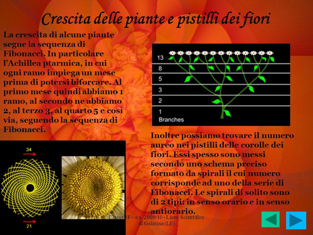 Crescita delle piante e pistilli dei fiori La crescita di alcune piante segue la sequenza di Fibonacci. In particolare lAchillea ptarmica, in cui ogni