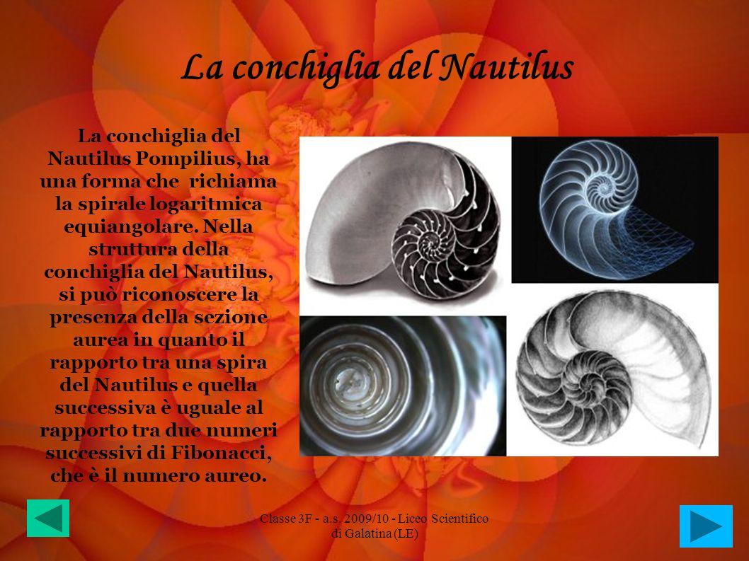 La conchiglia del Nautilus La conchiglia del Nautilus Pompilius, ha una forma che richiama la spirale logaritmica equiangolare. Nella struttura della