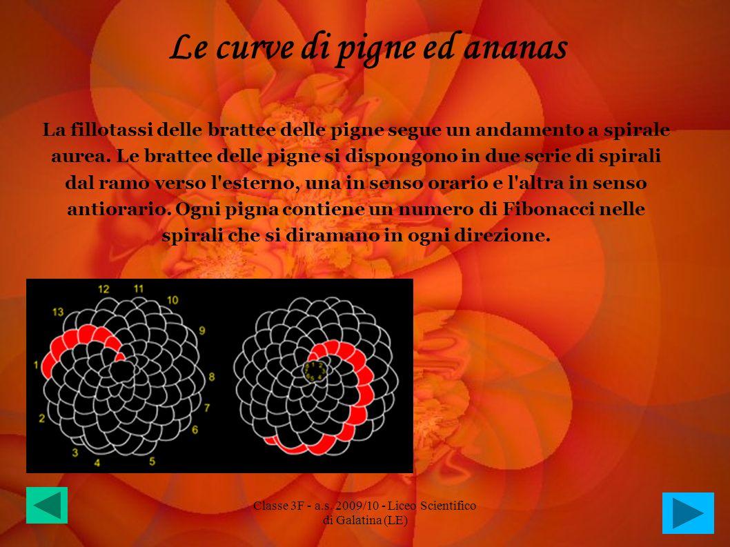 Le curve di pigne ed ananas La fillotassi delle brattee delle pigne segue un andamento a spirale aurea. Le brattee delle pigne si dispongono in due se