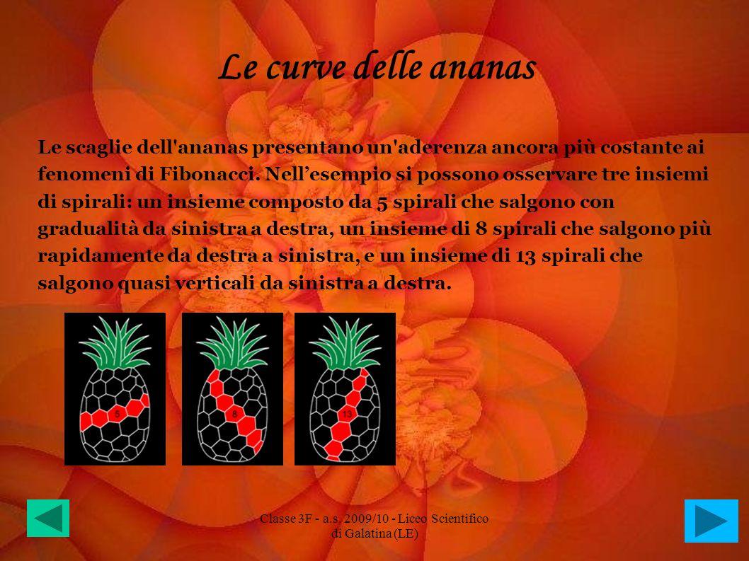 Le curve delle ananas Le scaglie dell'ananas presentano un'aderenza ancora più costante ai fenomeni di Fibonacci. Nellesempio si possono osservare tre