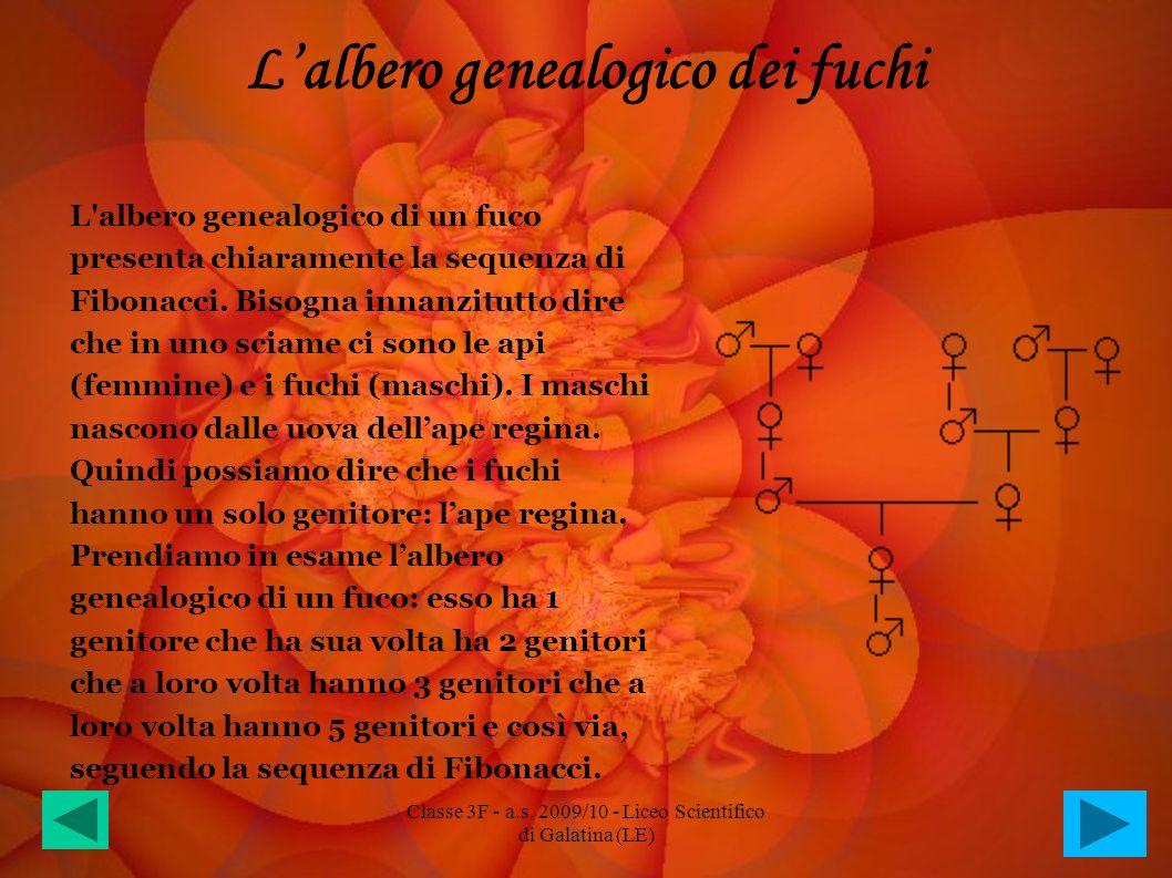 Lalbero genealogico dei fuchi L'albero genealogico di un fuco presenta chiaramente la sequenza di Fibonacci. Bisogna innanzitutto dire che in uno scia