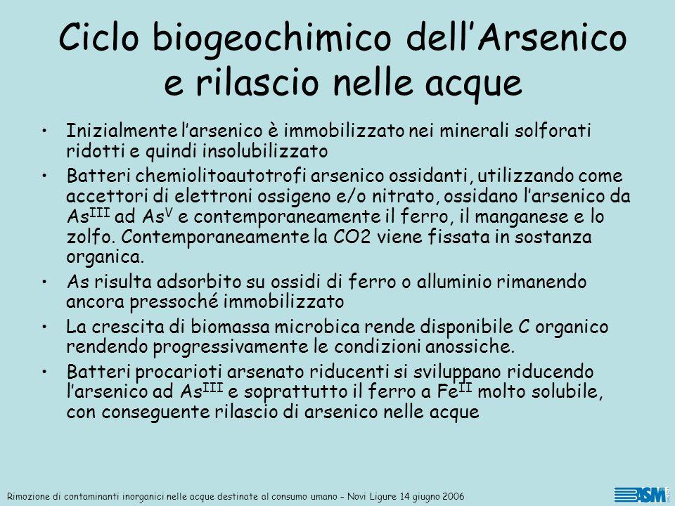 Inizialmente larsenico è immobilizzato nei minerali solforati ridotti e quindi insolubilizzato Batteri chemiolitoautotrofi arsenico ossidanti, utilizz