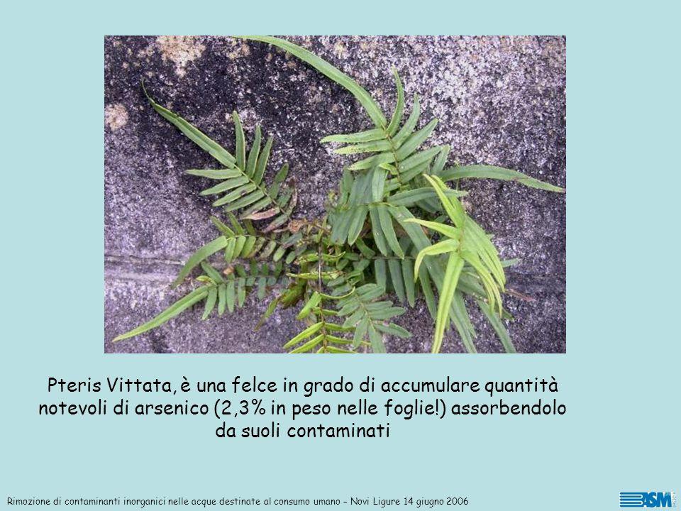 Rimozione di contaminanti inorganici nelle acque destinate al consumo umano – Novi Ligure 14 giugno 2006 Pteris Vittata, è una felce in grado di accum