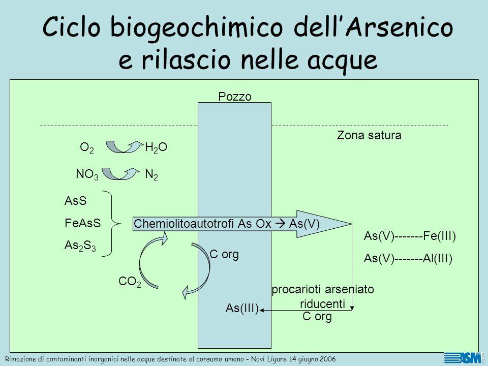 Inizialmente larsenico è immobilizzato nei minerali solforati ridotti e quindi insolubilizzato Batteri chemiolitoautotrofi arsenico ossidanti, utilizzando come accettori di elettroni ossigeno e/o nitrato, ossidano larsenico da As III ad As V e contemporaneamente il ferro, il manganese e lo zolfo.