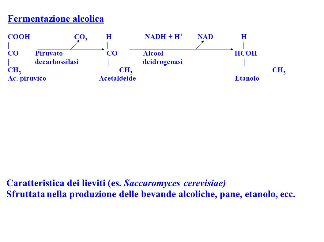 Fermentazione alcolica COOH CO 2 H NADH + H + NAD H | | | CO Piruvato CO Alcool HCOH | decarbossilasi | deidrogenasi | CH 3 CH 3 CH 3 Ac. piruvico Ace