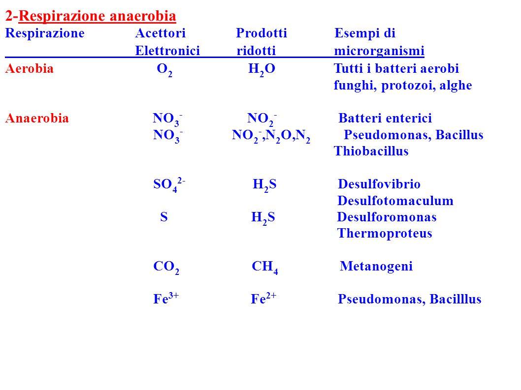 2-Respirazione anaerobia Respirazione Acettori Prodotti Esempi di Elettronici ridotti microrganismi Aerobia O 2 H 2 O Tutti i batteri aerobi funghi, p
