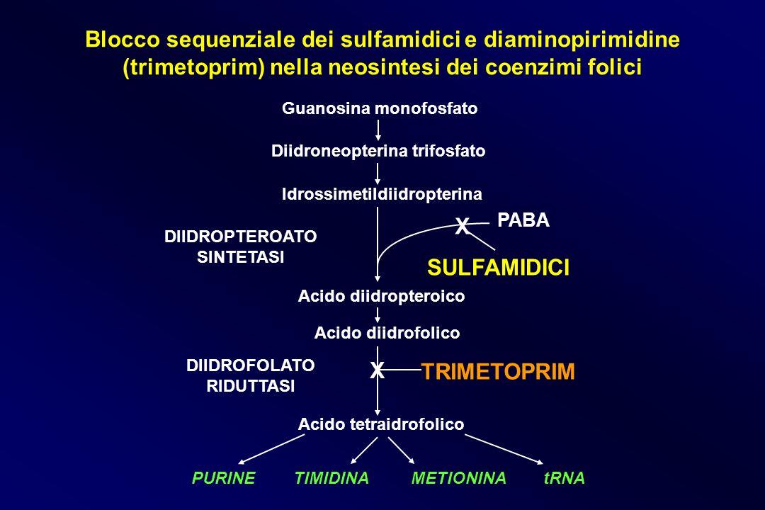 Blocco sequenziale dei sulfamidici e diaminopirimidine (trimetoprim) nella neosintesi dei coenzimi folici Guanosina monofosfato Diidroneopterina trifo